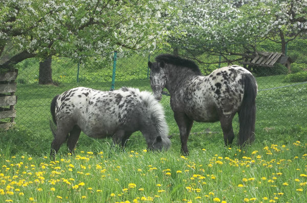 Pferde auf dem Fischerhof Klessing